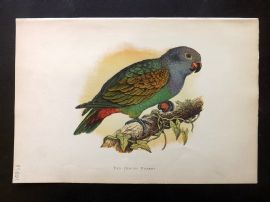 Greene Parrots in Captivity 1887 Hand Col Bird Print. Red-Vented Parrot
